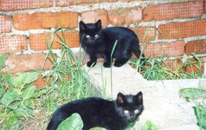 Абрамцевские котята