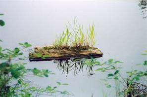Плавучая коряга